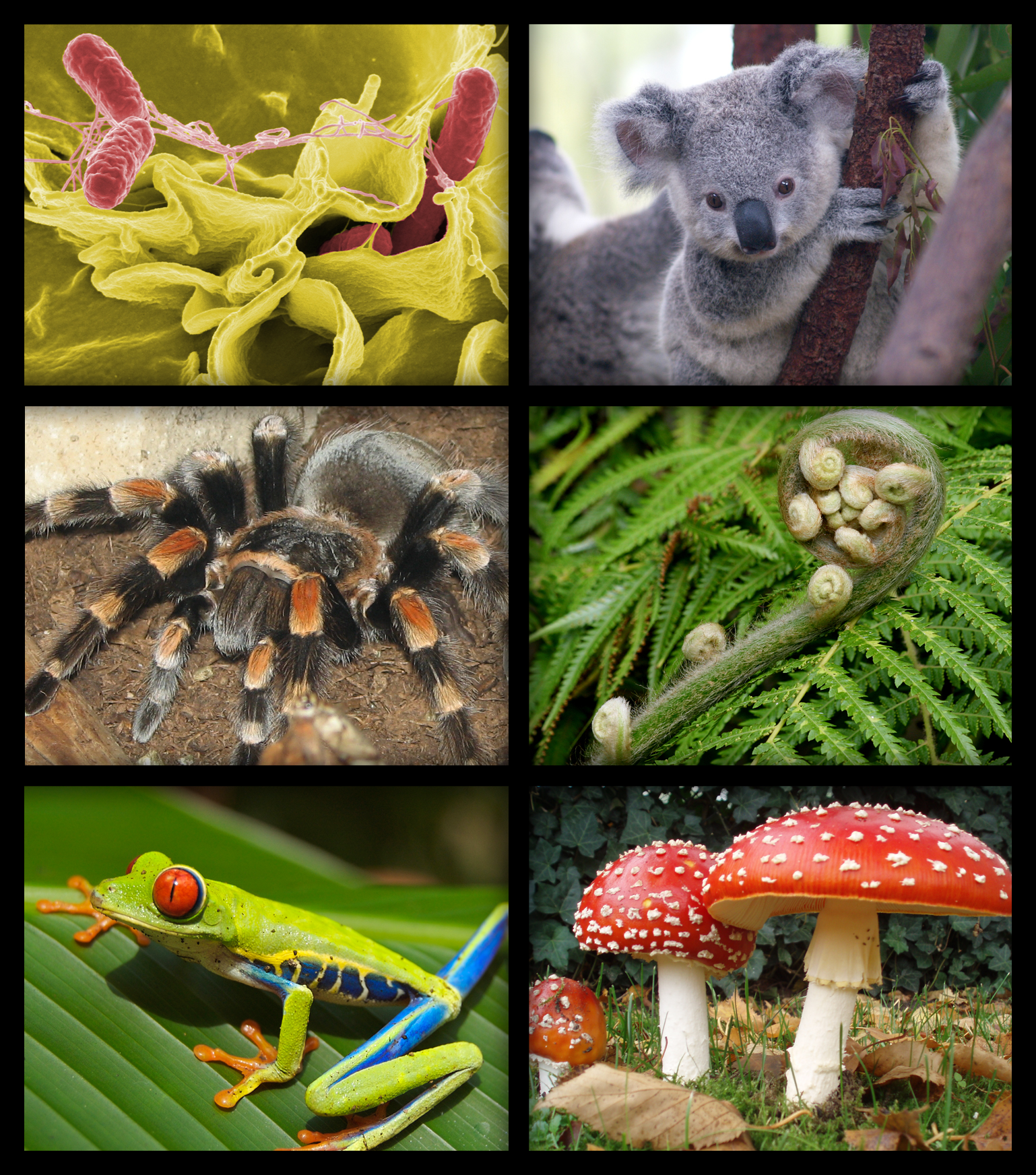 """Biology organism collage"" by Azcolvin429 - Own work. Licensed under Creative Commons Attribution-Share Alike 3.0 via Wikimedia Commons - http://commons.wikimedia.org/wiki/File:Biology_organism_collage.png#mediaviewer/File:Biology_organism_collage.png"