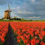 Emerytura z Holandii – jak otrzymać?