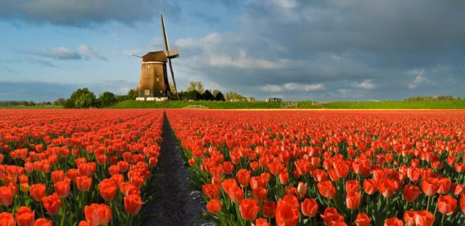 emerytura z holandii